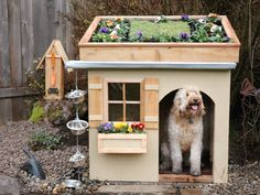 Designed to keep the pups cool and cozy! garden roof, slate floor and gutter rain catcher pouring into cascading water bowls! :) hee hee