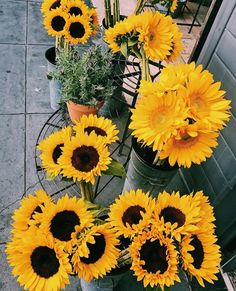 New photography nature flowers flora 18 ideas My Flower, Yellow Flowers, Beautiful Flowers, Happy Flowers, Yellow Sunflower, Plants Are Friends, Sunflower Wallpaper, Happy Colors, Mellow Yellow