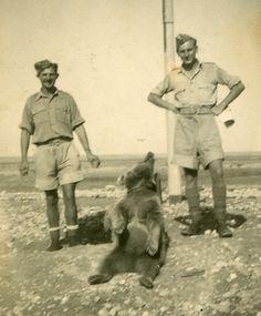 Wojtek Bear, 1940's Fashion, Animal Magic, Angels And Demons, Historical Maps, My Heritage, World War Ii, Wwii, Funny Memes