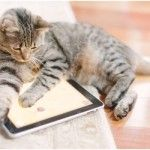 cat sleep on ipad