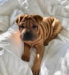 Mister Woof Loves... #puppy #puppyrolls