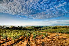 Under the Super Tuscan Sun