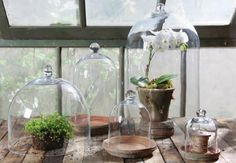 Order the Mini Glass Clochetoday online from The Garden Gates . Find more home & garden decor from Homart at The Garden Gates . Learn more about Mini Glass Cloche by visiting The Garden Gates . Glass Dome Display, Glass Domes, Glass Vase, Glass Bell Jar, The Bell Jar, Bell Jars, Intelligent Design, Hanging Plants, Indoor Plants