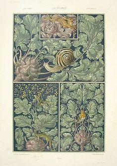 anton seder snail | File:Anton Seder Robin Redbreast Snail.jpg - Wikimedia Commons