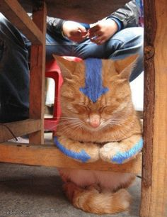 This cat is the avatar!