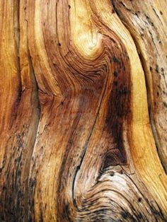 This is an example of edge wood grain. There is a really nice swirling effect that makes this wood unique.