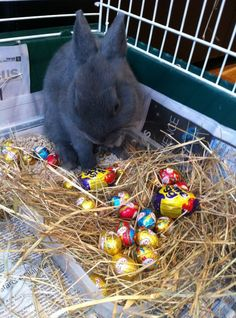 I told you the Easter Bunny was real!!!