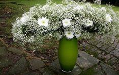 Šater, rostlina stovek něžných kvítků