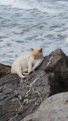 Cat on a rock. Moment's