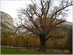 La vall d'Hormoier a l'alta Garrotxa Painting, Art, Art Background, Painting Art, Kunst, Paintings, Performing Arts, Painted Canvas, Drawings