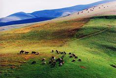 cattle herding in Armenia .. stories i've heard of the motherland http://www.gotravel.am/en/incoming