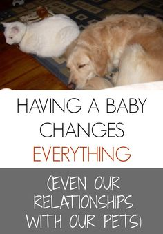 Before you become a parent, your pets ARE your babies. How do you make room for both?