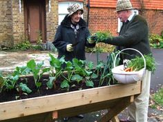 moestuin senioren Plants, Google, Planters, Plant, Planting