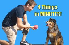 How to Teach your Dog to do 4 things in Minutes (Roll over, Play dead, S...