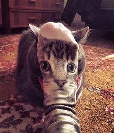 Cat Sock | The Top 29 Perfectly Timed Photos Will Leave You Awestruck