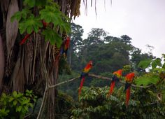 Amazon Fauna and Flora in danger _   Among all birds recorded in Brazil about 800 species are located in the Amazon and make this habitat a large nest of wealth, with really impressive pictures captured throughout the forest. this is an example of flora and fauna in brazil.