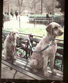 esperando en la puerta del The Loeb Boathouse, Central Park  Manhattan (New York City)