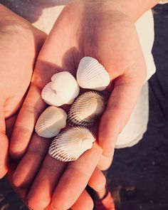 "superKinder 🇷🇴🇬🇧 on Instagram: ""🐚🐚🐚 #shell #sunsetlight #beautiful #beach #bkacksea #sea #sand #summer #sunset #shells #nice #lovely #cool #europe #travel #travelgram…"" Summer Sunset, Beautiful Beach, Shells, Europe, Sea, Cool Stuff, Nice, Travel, Instagram"