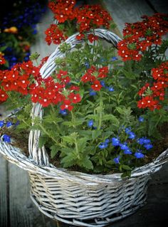 Container Gardening Ideas Red Verbena - If you think outside the mum and aster box, there are lots of great plants for your fall containers. Consult this list of unusual and beautiful plants. Container Flowers, Flower Garden, Hanging Plants, Plants, Hanging Plants Diy, Fall Container Gardens, Fall Containers, Blue Flowers Garden, Beautiful Flowers