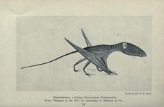 The sweetest Pterodactyl ever, drawn by Miss E B Seely. From Animals of the Past, via Medical Heritage Library