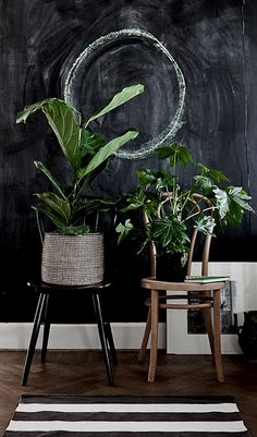 black wall and plants