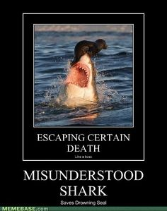Today's LOL I'm afraid you did misunderstood, little seal. Morning all!!