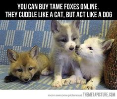 I'm getting a fox…