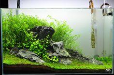 25 Cool Betta Fish Tank Ideas That Will Inspire You - meowlogy Aquascaping, Aquarium Aquascape, Betta Aquarium, Planted Aquarium, Turtle Aquarium, Aquarium Landscape, Nature Aquarium, Fish Tank Terrarium, Aquarium Terrarium