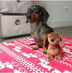 Our friend Emma and her new weendeer #dachshund blanket from TheSmootheStore.com Her Mom says she was playing magic carpet ride with it. So adorable!