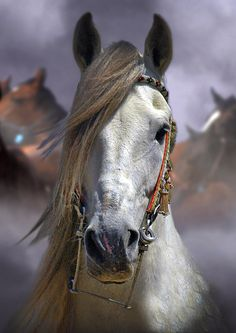 This pic is so pretty. I love horses