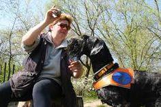 Bildergebnis für blinde menschen mit hunden Blinde, People