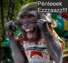 Its Friday meme lol humor funny pictures funny photos funny - Monkeys Funny - Its Friday meme lol humor funny pictures funny photos funny The post Its Friday meme lol humor funny pictures funny photos funny appeared first on Gag Dad. Funny Monkey Pictures, Friday Funny Pictures, Funny Photos, Tgif Funny, Funny Memes, Funny Friday, Funny Monkey Memes, Happy Friday Gif, Crazy Friday
