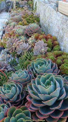 Tips for the design of small gardens - plantas - Jardinería Succulent Landscaping, Succulent Gardening, Front Yard Landscaping, Planting Succulents, Landscaping Ideas, Cacti Garden, Succulent Rock Garden, Propagate Succulents, Outdoor Cactus Garden