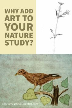 Why Add Art To Your Nature Study? - homeschool science - TheHomeschoolScientist.com