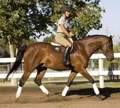 Common errors riders make when they perform the sitting trot