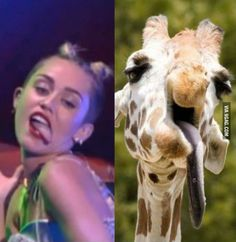 si parese girafa lambiendo!