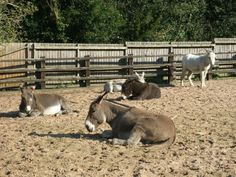 Siesta time for our donkeys