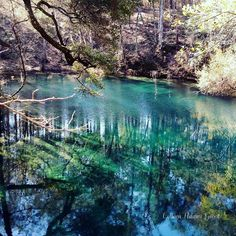 Hammock Spring Leon County Sinks, Apalachicola National Forest Took this photo while hiking there on 2/7/2016