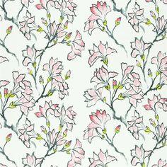 magnolia tree - blossom