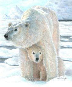 Polar Love - colored pencil drawing by ©Carla Kurt (via FineArtAmerica)