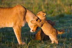 hug - Isak Pretorius Wildlife Photography