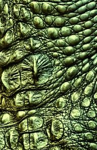#Textured #alligator skin by Mike Moats.