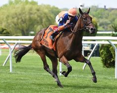Martin Schwartz's Sea Calisi made her return to the races a winning one in the $200,000 Sheepshead Bay Stakes (G2T) May 6, 2017 at Belmont Park.