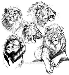 Pride (Lion Illustration) by Frederik Lund, via Behance Lion Drawing, Drawing Poses, Drawing Sketches, Drawing Tips, Drawing Ideas, Big Cats Art, Furry Art, Cat Art, Art Reference Poses