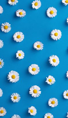 Cute Flower Wallpaper For Iphone Daisy Wallpaper, Tumblr Iphone Wallpaper, Wallpaper For Your Phone, Screen Wallpaper, Cool Wallpaper, Pattern Wallpaper, Flower Iphone Wallpaper, Iphone Bleu, Iphone Hintegründe