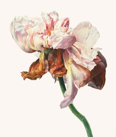 Rosie Sanders, A Shropshire lad Abstract Flowers, Watercolor Flowers, Watercolor Paintings, Painting & Drawing, Botanical Flowers, Botanical Prints, Art And Illustration, Art Floral, Nature Drawing