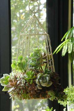 6 maneiras de decorar a casa com suculentas Indoor Garden, Garden Art, Garden Plants, Outdoor Gardens, Garden Design, Small Gardens, Hanging Succulents, Cacti And Succulents, Hanging Plants