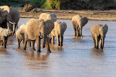 Elephant Photos Elephant in National Park Kenya, East African by byrdyak