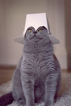 hats for cats are the best hats.