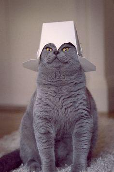 Cat Hat_Hat Cat